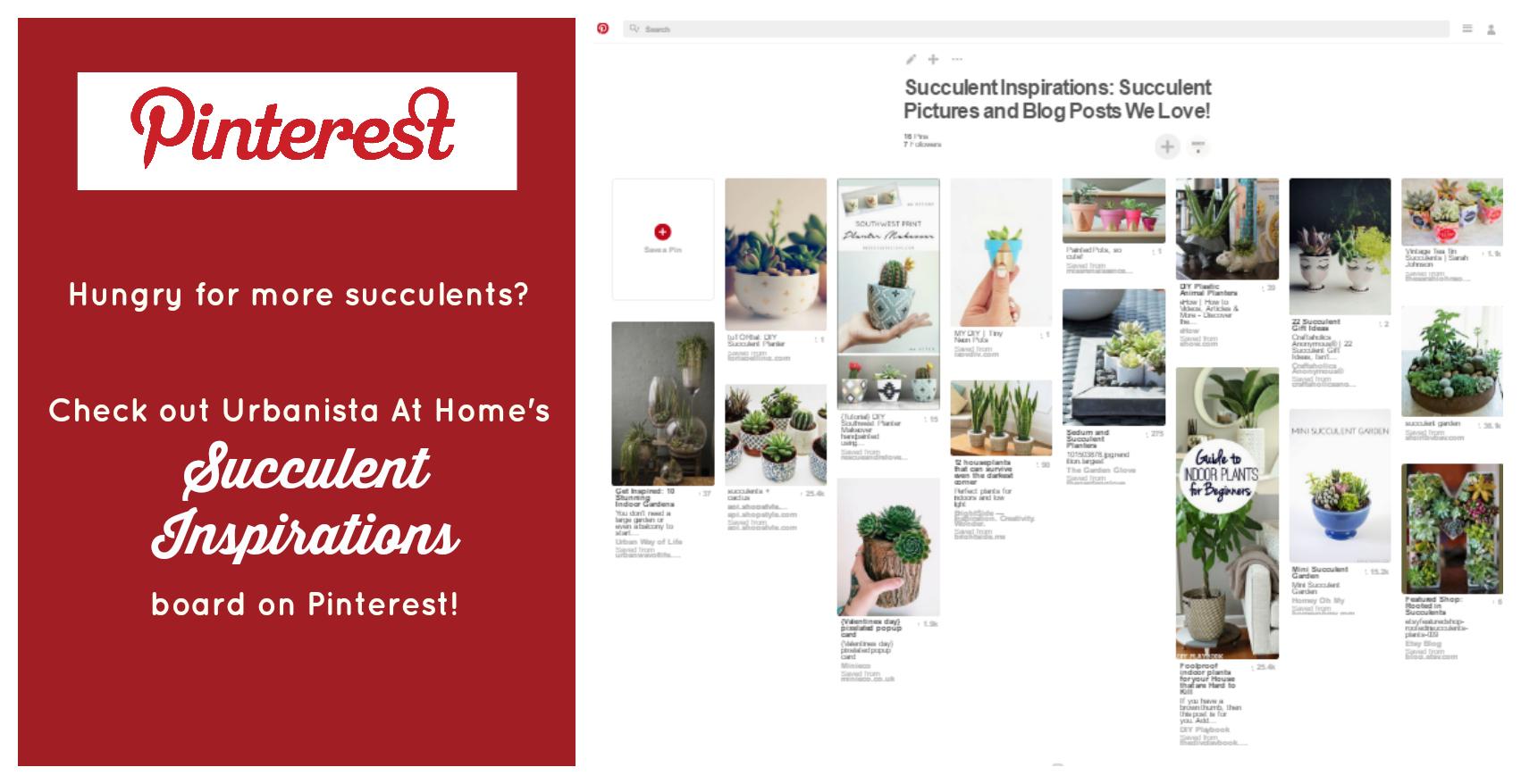 urbanistaathome-com-pinterest-succulent-inspirations